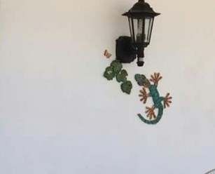 Gecko under the lamp