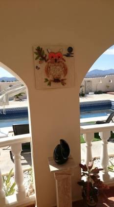ollie-owl-in-patio