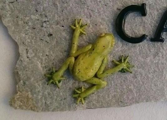 frog-on-tile
