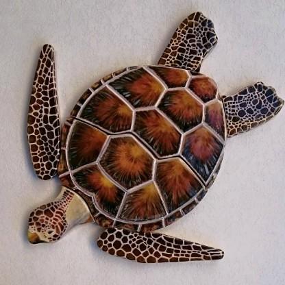 brown-turtle-2