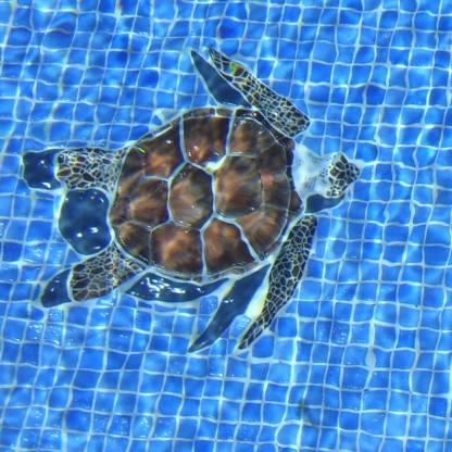 turtle-under-water-2