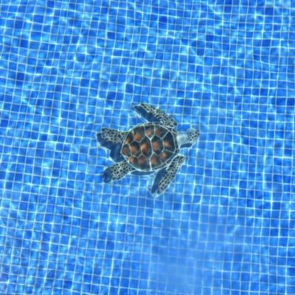 turtle-under-water-3