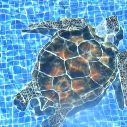turtle-under-water