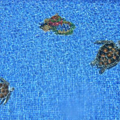 turtles-under-water-with-coral
